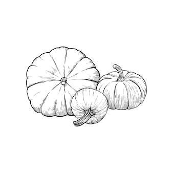 Calabazas dibujadas a mano ilustración vectorial