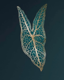 Caladium belleymel, grabado vintage de hoja del corazón de jesús, remezcla de la obra de arte original de benjamin fawcett.