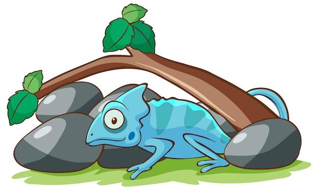 Camaleón azul debajo de la rama