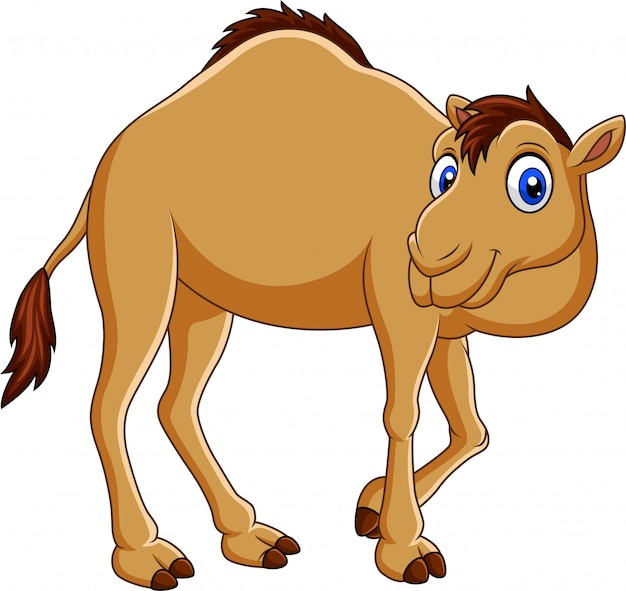 Camello de dibujos animados aislado sobre fondo blanco