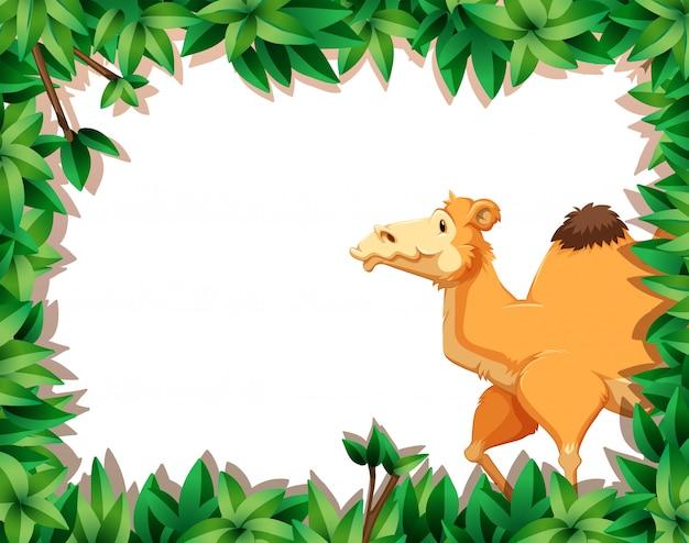 Camello en la naturaleza enmarcado backgorund