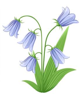 Campanula de flores de campana - dibujado a mano ilustración de campanillas azules y capullos sobre fondo blanco. conjunto de iconos de coloridas flores. elementos florales aislados.