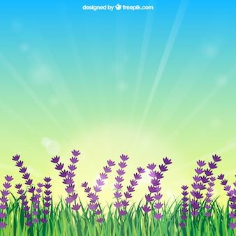 Campo de flores con amanecer