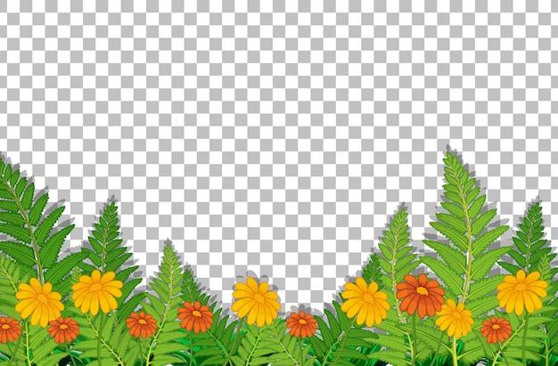 Campo de flores con hojas sobre fondo transparente