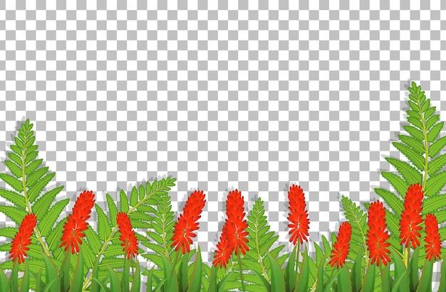 Campo de flores de peine de gallo plateado sobre fondo transparente