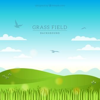 Campo de hierba plano con pájaros