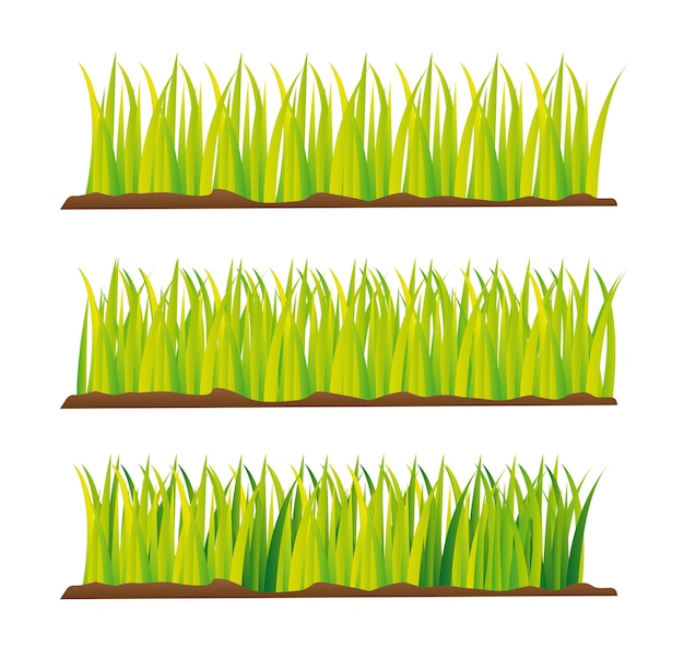 Campo hierba verde