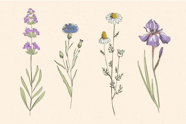 Campo de hierbas botánicas y flores silvestres