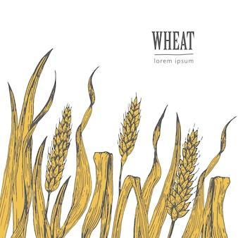 Campo de la ilustración vectorial de trigo, ideal para el envasado de pan, etiquetas de cerveza