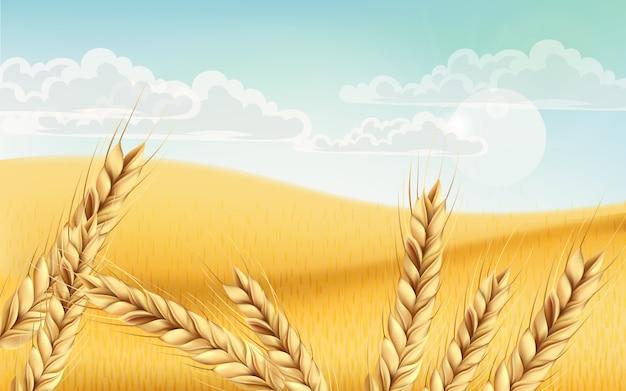 Campo lleno de granos de trigo. cielo nublado azul. realista