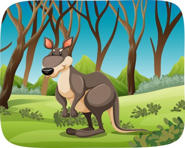 Un canguro en el fondo de la naturaleza
