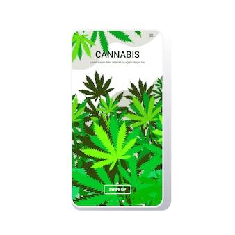 Cannabis deja plantación de cáñamo industrial creciente planta de marihuana negocio comercial consumo de drogas concepto pantalla del teléfono aplicación móvil copia espacio