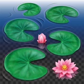 Capullo de loto y flor rosa con hojas sobre el agua con fondo transparente de ondas para la flora
