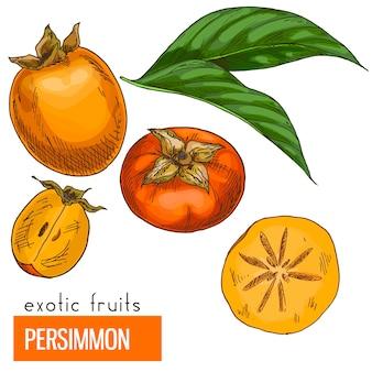 Caqui. ilustración de vector de color