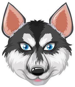 Cara de husky siberiano