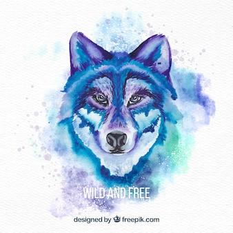 Cara de lobo salvaje en acuarela