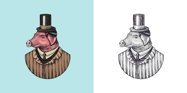 Carácter de cerdo peluquero porcino moda animal vitoriano caballero en una chaqueta dibujada a mano