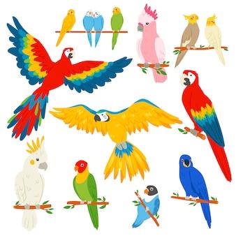 Carácter de loro loro y aves tropicales o dibujos animados guacamayos exóticos en trópicos ilustración conjunto de colorido pájaro tropical sobre fondo blanco.