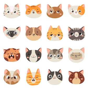 Caras de gatos lindos