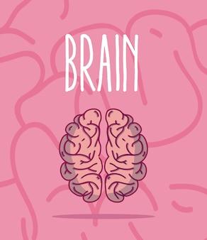 Caricatura de cerebro humano sobre fondo rosa