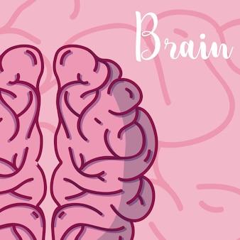 Caricatura de cerebro humano