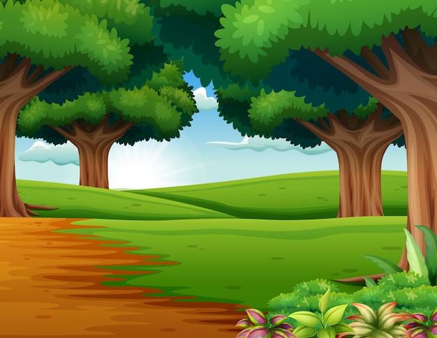 Caricatura de la escena del bosque con muchos árboles.