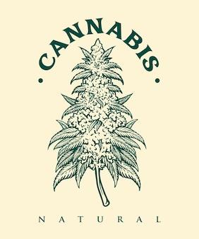 Cartel de cannabis vintage