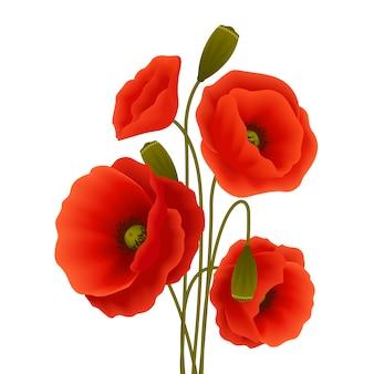 Cartel de la flor de amapola