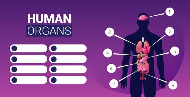 Cartel de infografía de estructura del cuerpo humano con iconos de órganos internos masculinos anatomía sistema placa vertical horizontal