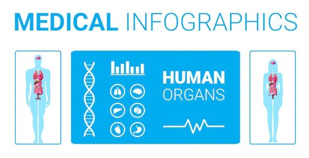Cartel de infografía médica de estructura del cuerpo humano con placa de sistema de anatomía de órganos internos masculinos femeninos de longitud completa horizontal