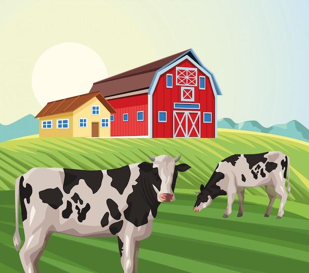 Casa de granja granero comiendo vaca en el campo
