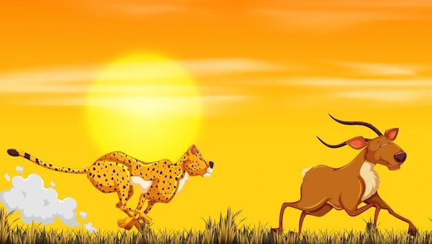 Una caza de leopardo para la comida.