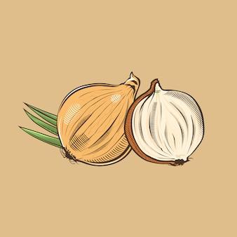 Cebolla en estilo vintage. ilustración vectorial de color