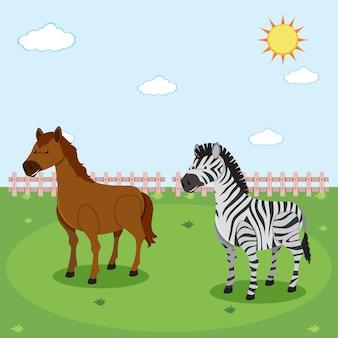 Cebra y caballo en la naturaleza