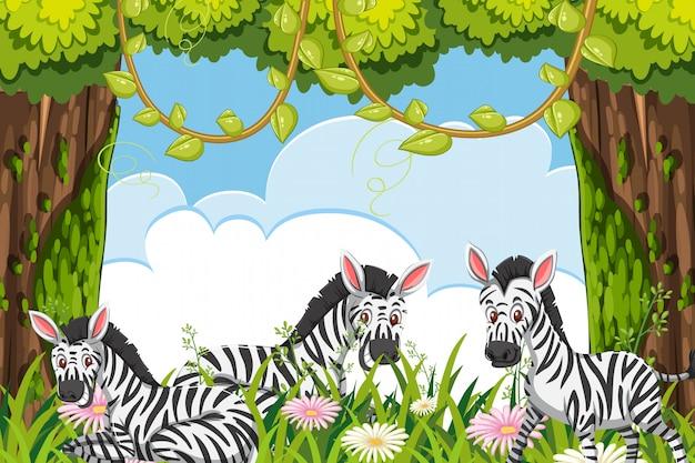 Cebras en escena de la jungla