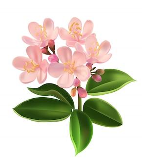 Centaurium erythraea flor ilustración vectorial