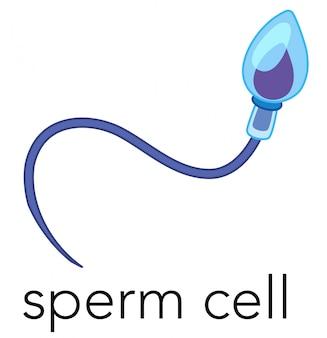 Cerca de una célula de esperma
