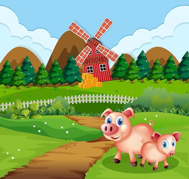 Cerdo en escena de tierras de cultivo
