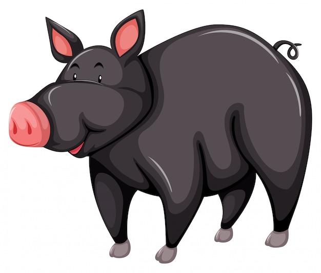 Cerdo gris