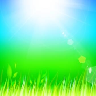 Césped verde.
