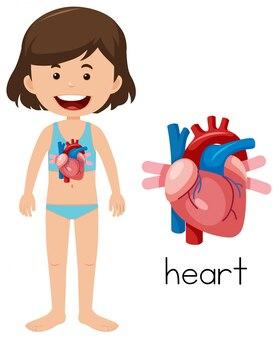 Chica joven con la colocación del corazón