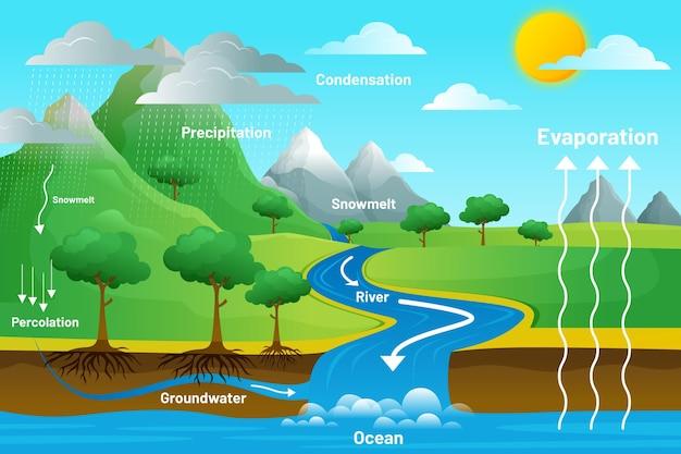 Ciclo del agua ilustrado con pasos
