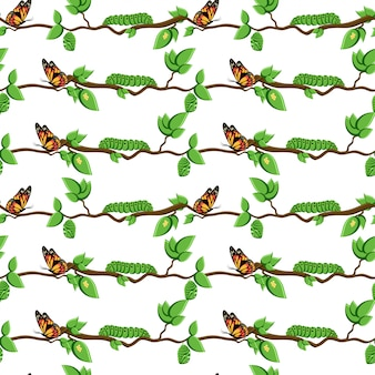 Ciclo de vida de la mariposa metamorfosis sin patrón.