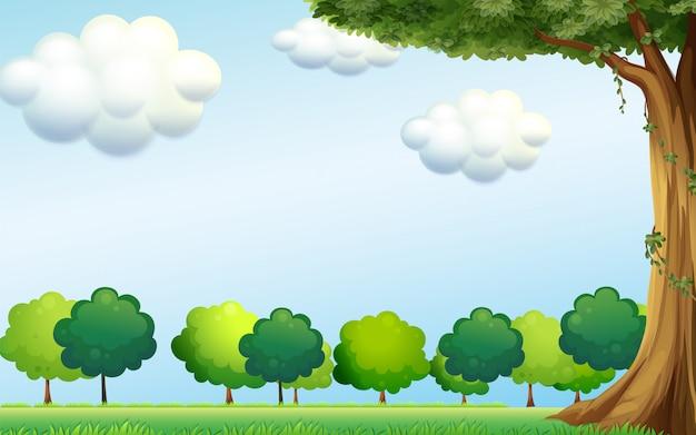 Un cielo azul claro y los arboles verdes