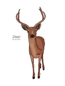 Ciervo, animal, boceto dibujar a mano