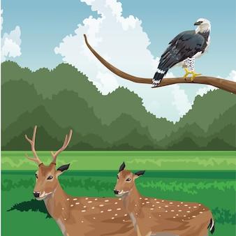 Ciervos y águila en rama fauna tropical y paisaje de flora