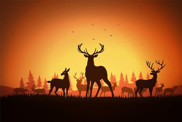 Ciervos en el campo