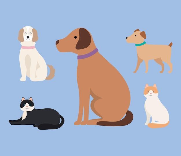 Cinco mascotas domésticas