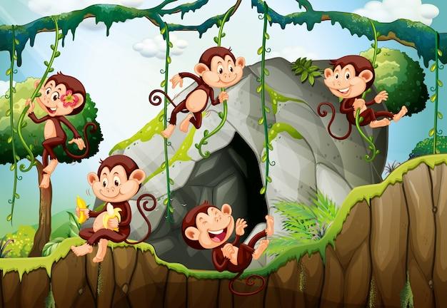 Cinco monos que viven en el bosque
