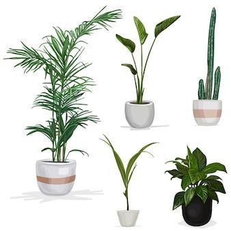 Cinco plantas realistas